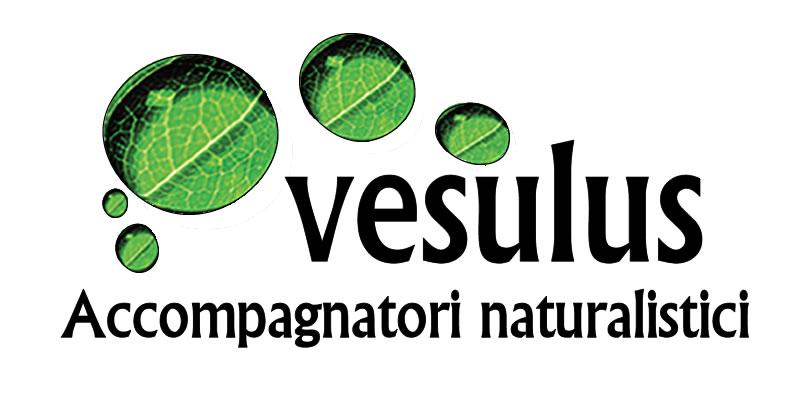 FL705-Logo Vesulus definitivo 2