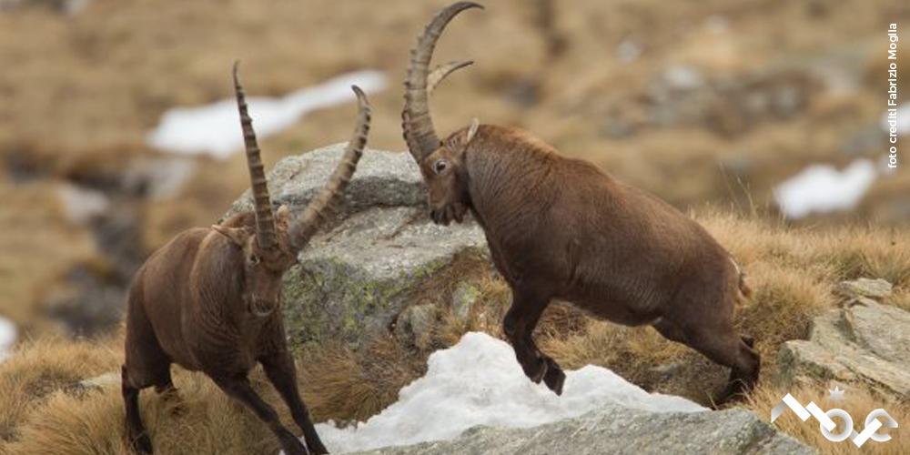 Mostra Fauna del Parco Moglia