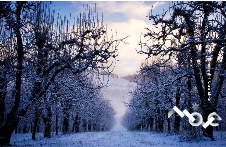 filari-neve